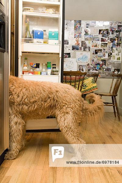 sehen Hund Kühlschrank sehen,Hund,Kühlschrank