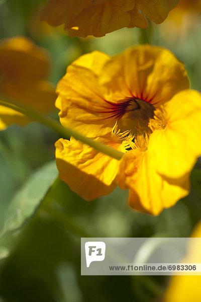 Nahaufnahme Blume