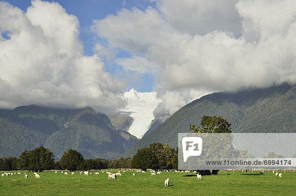 neuseeländische Südinsel  Neuseeland  Westküste