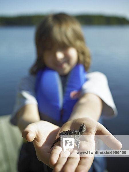 Boy Holding Baby Snapping Turtle  Cache Lake  Algonquin Park  Ontario  Canada