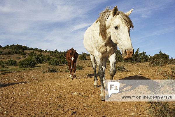 Horses  Aude  Languedoc-Roussillon  France