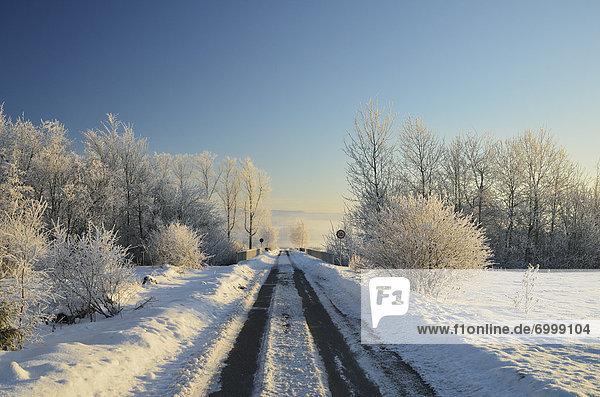 Road Through Winter Landscape  near Villingen-Schwenningen  Black Forest  Schwarzwald-Baar  Baden-Wurttemberg  Germany