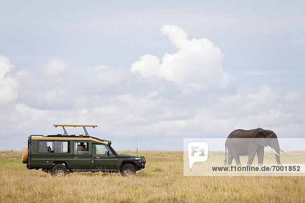 Safari Vehicle and African Bush Elephant  Masai Mara National Reserve  Kenya