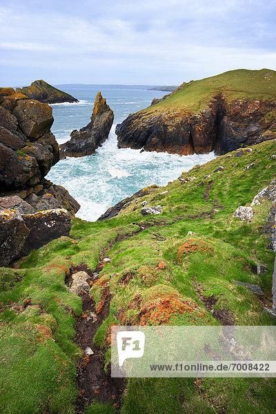 Weg  Steilküste  Meer  vorwärts  Wiese  Cornwall  England