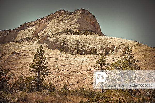 Zion Nationalpark  Utah  USA