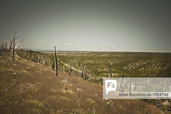 Kaibab National Forest  Arizona  USA