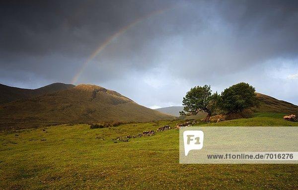 über  Grenze  Galway  Irland  Regenbogen