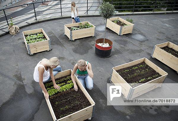 Teenagermädchen arbeiten in Pflanzenkisten