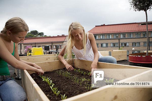 Teenagermädchen arbeiten im Pflanzkasten