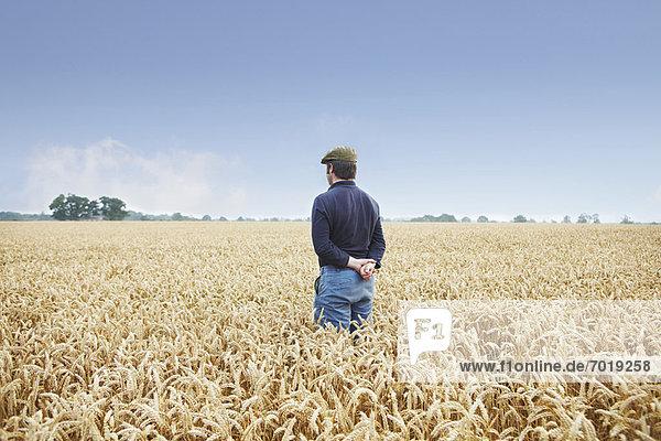 Bauer im Weizenfeld stehend Bauer im Weizenfeld stehend