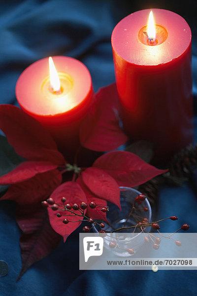 Weihnachtsstern  Euphorbia pulcherrima  hoch  oben  nahe  Kerze  Ast  Ansicht  Flachwinkelansicht  Winkel  Stechpalme