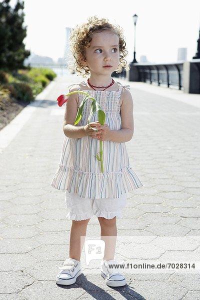 halten  Mädchen  Tulpe