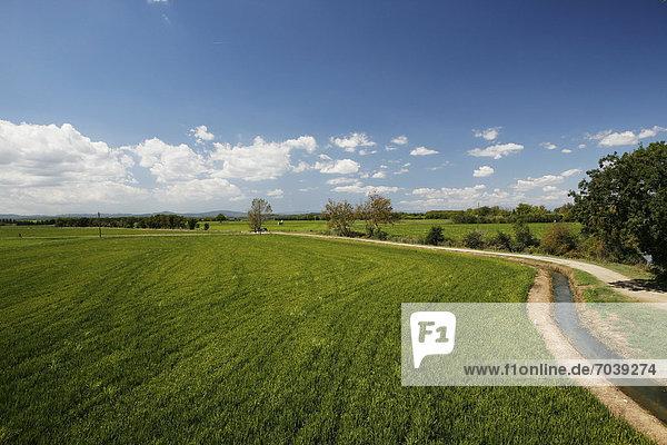 Reisfeld  Reisanbau bei Pals  Basses d'en Coll  Katalonien  Spanien  Europa