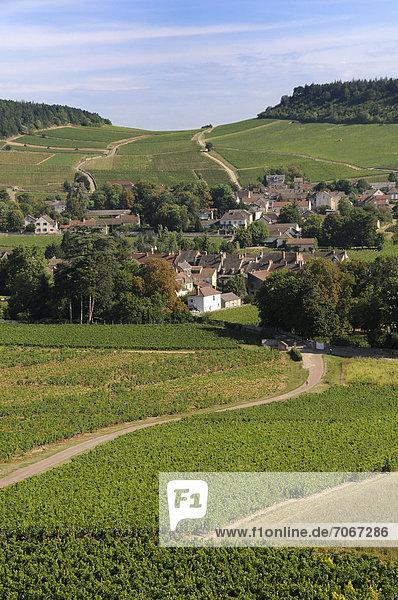 Frankreich Europa Dorf umgeben Weinberg
