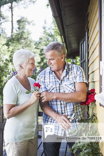 Senior Mann gibt Rose an Frau im Garten