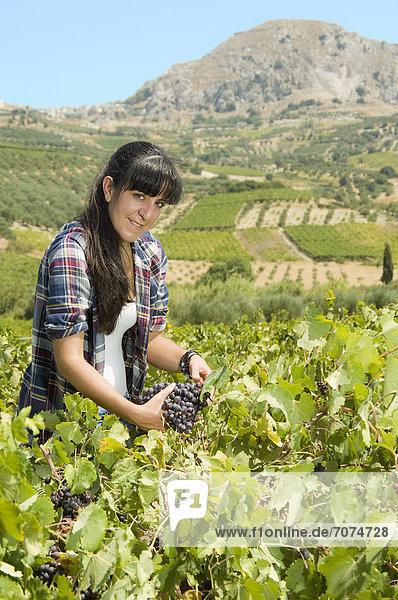 Junge Frau bei der Weinlese  Kreta  Griechenland Junge Frau bei der Weinlese, Kreta, Griechenland