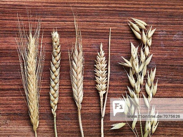 Getreide Vielfalt Holz