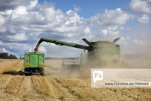 Getreide  schneiden  aufwärts  Nutzpflanze  Maschine  Mähdrescher  fließen  groß  großes  großer  große  großen  Stroh  Staub  reif