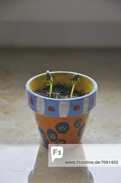 Bemalter Blumentopf mit Sprossen,  Nahaufnahme