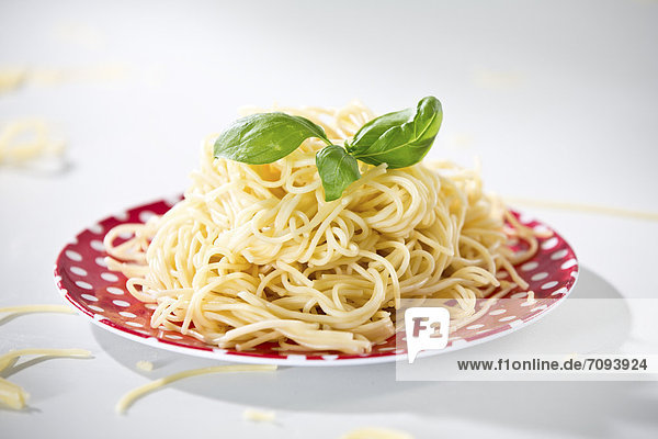Germany  Plate of spaghetti with basil  close-up