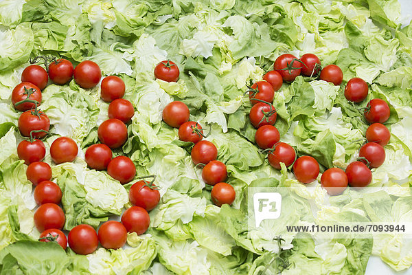 Germany  Bio letters forming by tomatoes on cabbage leaf