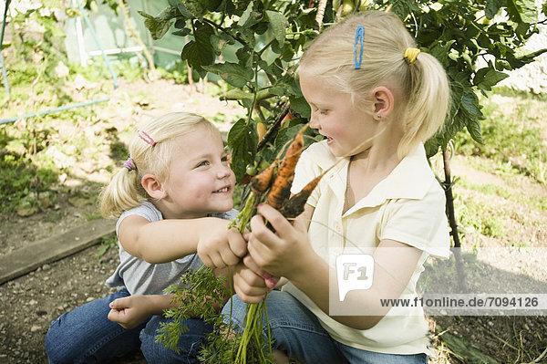 Girls gathering carrots in vegetable garden