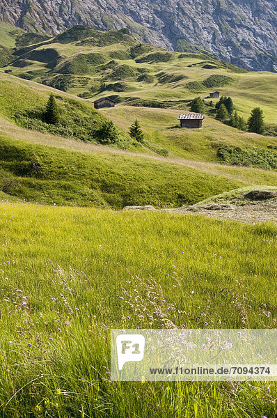 Italy  View of Seiser Alm  alpine meadow and alpine hut at South Tyrol