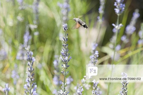 zwischen  inmitten  mitten  fliegen  fliegt  fliegend  Flug  Flüge  Blume zwischen, inmitten, mitten ,fliegen, fliegt, fliegend, Flug, Flüge ,Blume