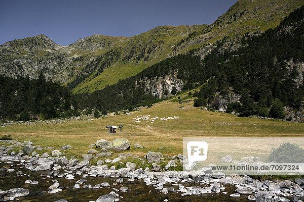 Wildbach,  Landschaft in den Pyrenäen,  französische Pyrenäen,  Nationalpark bei ArgelËs-Gazost,  Region Midi-PyrÈnÈes,  DÈpartement Hautes-PyrÈnÈes,  Frankreich,  Europa