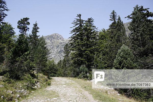 Wanderweg  Landschaft in den Pyrenäen  französische Pyrenäen  Nationalpark bei ArgelËs-Gazost  Region Midi-PyrÈnÈes  DÈpartement Hautes-PyrÈnÈes  Frankreich  Europa