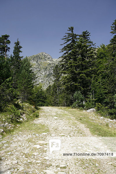 Wanderweg in den Pyrenäen  französische Pyrenäen  Nationalpark bei ArgelËs-Gazost  Region Midi-PyrÈnÈes  DÈpartement Hautes-PyrÈnÈes  Frankreich  Europa