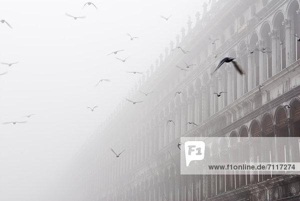Fliegende Tauben  Prokuratien im Nebel  Markusplatz  San Marco  Venedig  Venezia  Venetien  Italien  Europa