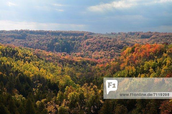 Farbaufnahme  Farbe  Tal  Wald  Schlucht  Biber  Kanada  Ontario