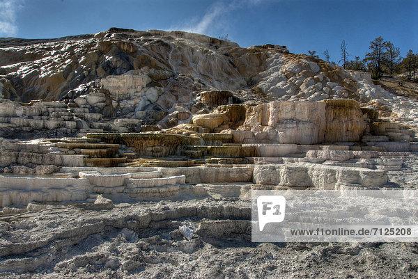 mammoth  hot springs  Yellowstone  national park  Wyoming  USA  United States  America  nature