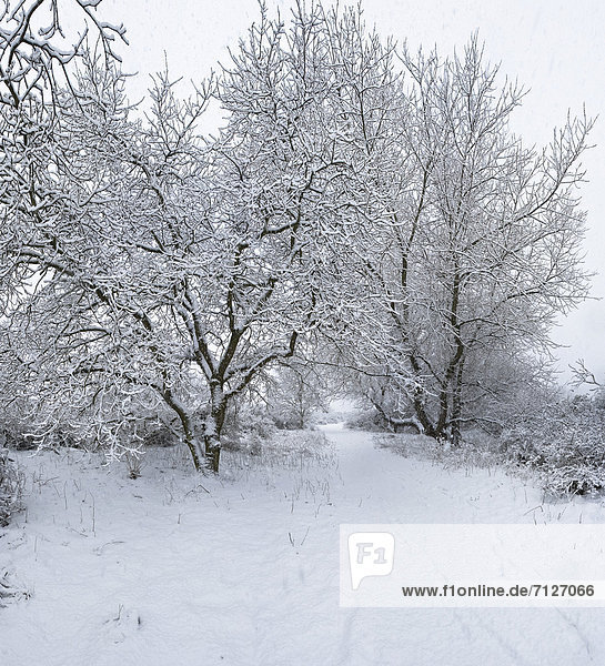 Netherlands  Holland  Europe  Egmond Binnen  Landscape  Forest  Wood  Trees  Winter  Snow  Ice  snowfall  snow  Snowy  trees
