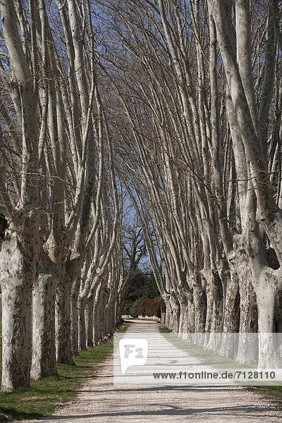 Frankreich  Europa  Baum  Straße  Gasse  Provence - Alpes-Cote d Azur
