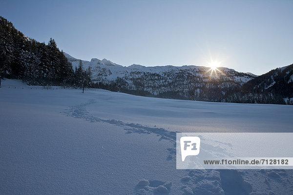 Spur  Landschaftlich schön  landschaftlich reizvoll  Winter  Schnee  Gegenlicht  Österreich  Salzburg  Sonne