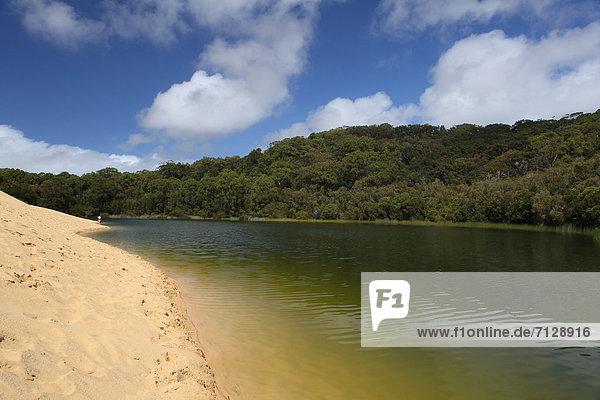 Freizeit Mann Ostküste Entspannung ruhen Wald See Meer Holz Sand Insel Einsamkeit Düne schwimmen Australien Ökotourismus Fraser Island Paradies Queensland Rest Überrest Tourismus Freizeit