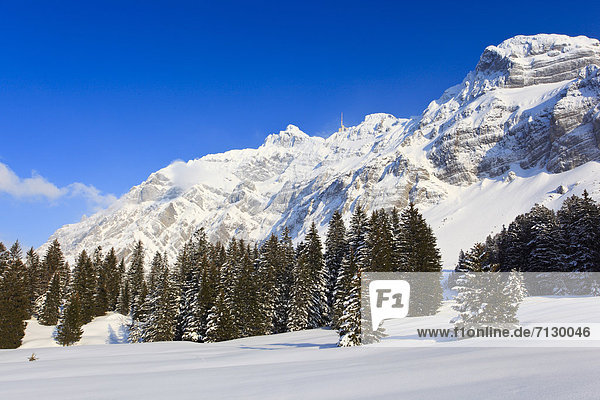 Panorama Europa Schneedecke Berg Winter Sonnenstrahl Baum Himmel Schnee Wald Holz Alpen blau Ansicht Sonnenlicht Tanne Bergmassiv Sonne Schweiz Bergpanorama