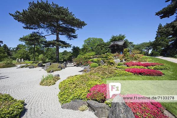 Europa  britisch  Großbritannien  London  Hauptstadt  Pflanze  Garten  Richmond London Borough of Richmond upon Thames  England  Japanischer Garten