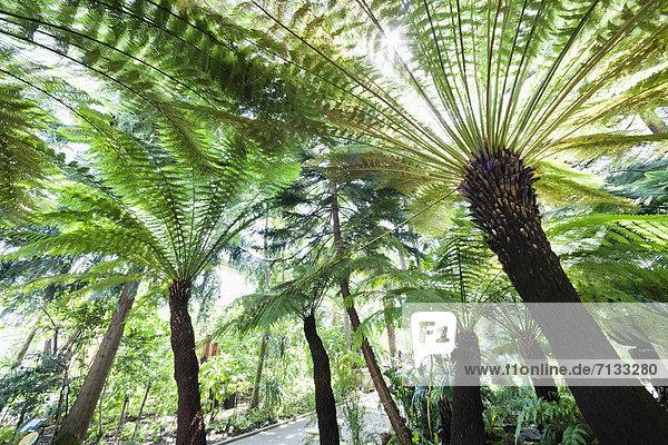 Palme  Europa  britisch  Großbritannien  London  Hauptstadt  Pflanze  Garten  Richmond London Borough of Richmond upon Thames  England