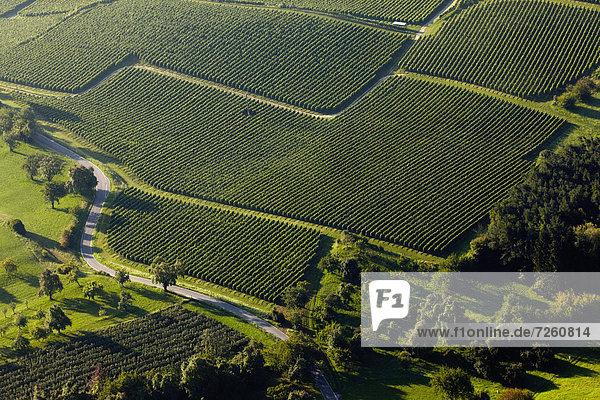 Weinhänge  Überlingen  Baden-Württemberg  Deutschland  Europa Weinhänge, Überlingen, Baden-Württemberg, Deutschland, Europa