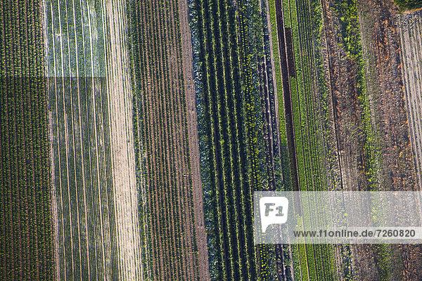 Reihen von Gemüsefeldern  Insel Reichenau  Baden-Württemberg  Deutschland  Europa Reihen von Gemüsefeldern, Insel Reichenau, Baden-Württemberg, Deutschland, Europa