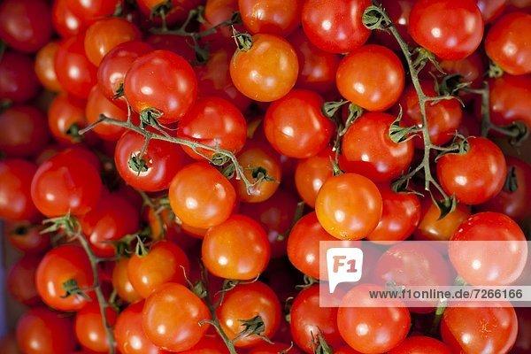 Europa  Morgen  Tomate  Mallorca  verkaufen  Balearen  Balearische Inseln  Markt  Pollenca  Spanien  Sonntag