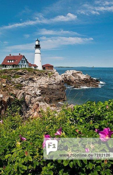 Wasserrand  Felsbrocken  Landschaftlich schön  landschaftlich reizvoll  Schönheit  Blume  Leuchtturm  Maine