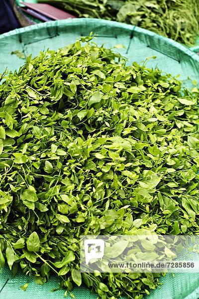 Haufen von süßem Blattbusch auf dem Markt