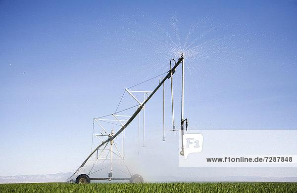 Sprinkler watering barley field