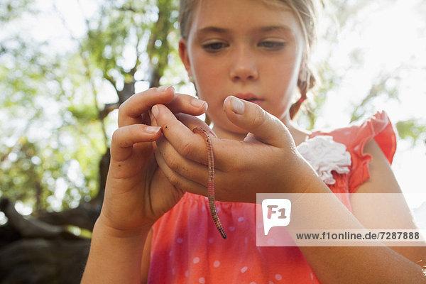 klein  halten  5-9 Jahre  5 bis 9 Jahre  Mädchen  Regenwurm  Lumbricida