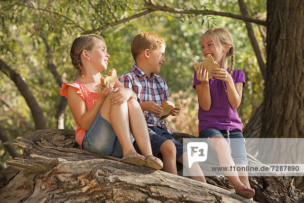 Three kids (4-5  6-7) eating peanut butter sandwiches together on tree