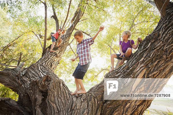 Three kids (4-5  6-7) playing in huge tree